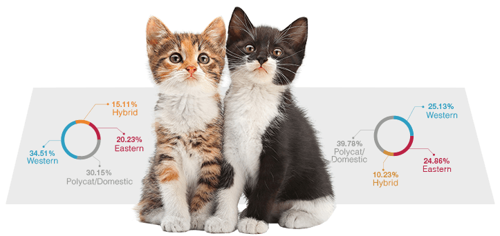 Cat Genetics Dna Test What Makes Your Kitty So Unique Easydna Canada